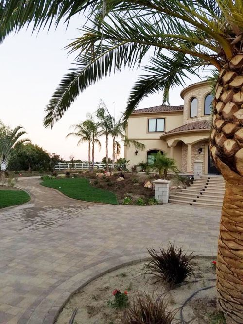 Landscaping with palm tree